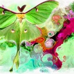 Papillon (collage numérique)